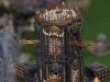 madison-october-apocalypse-game-09